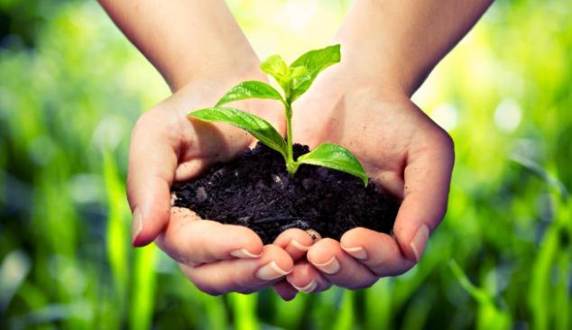 विश्व पर्यावरण दिवस: CM भूपेश ने  पर्यावरण को संरक्षित रखने की अपील