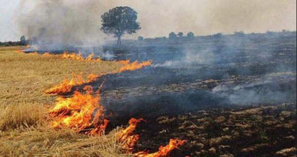 Save environment, Do not burn in the fields, Crop residue,
