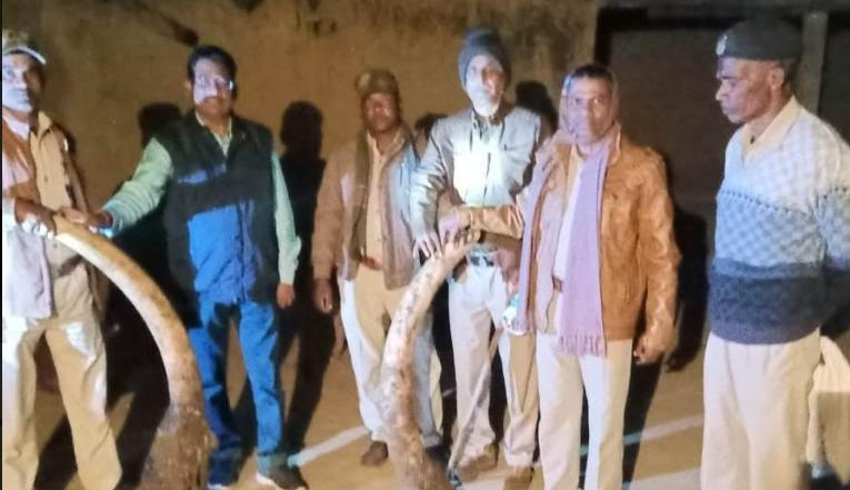 Rs 70 lakhs, Cost, Two ivory, Recovered,
