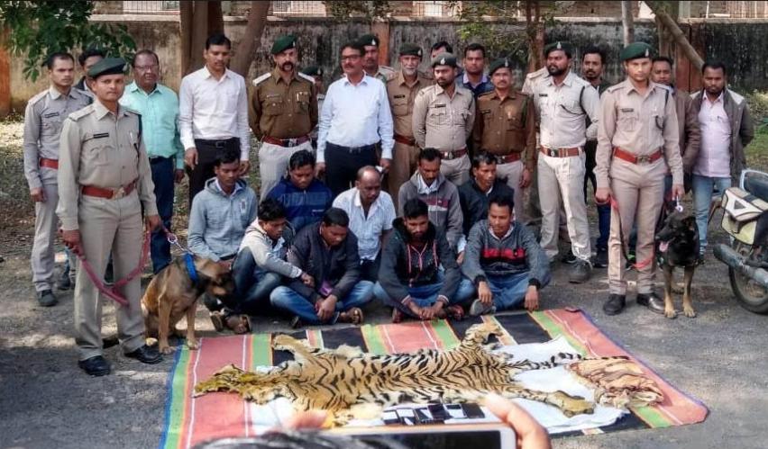 बाघ की खाल के साथ आठ गिरफ्तार