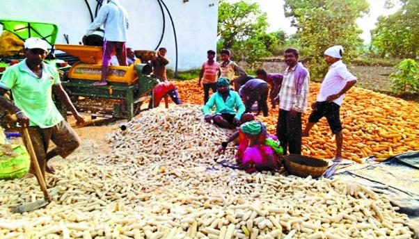 Chhattisgarh, Maize farmer, Registration to sell,