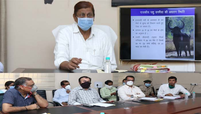 In chhattisgarh, Increase the number of tigers and forest buffalo, Initiative, Minister Akbar,