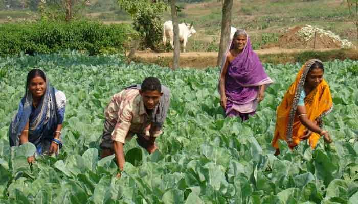 बस्तर के सात जिलों में बनेंगे 'बायोटेक किसान हब' 4 करोड़ रुपए मंजूर