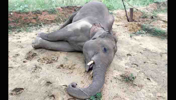 Dharamjaigarh of Raigad district, Deforestation, Due to current, Elephant death,