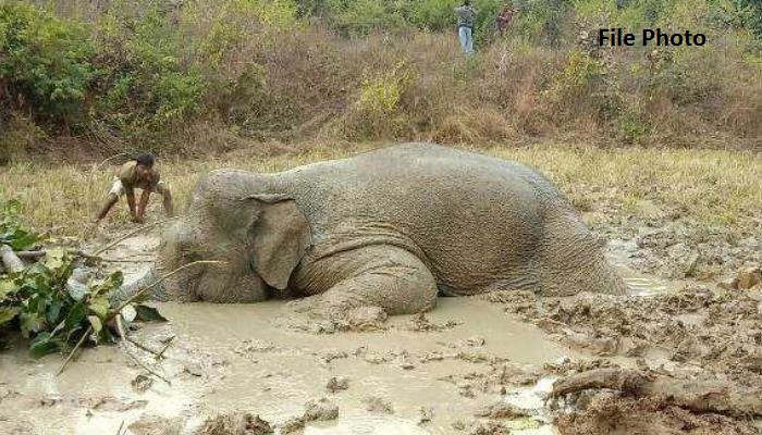 Painful blows of the elephant, Chhattisgarh, The country's largest, Action,