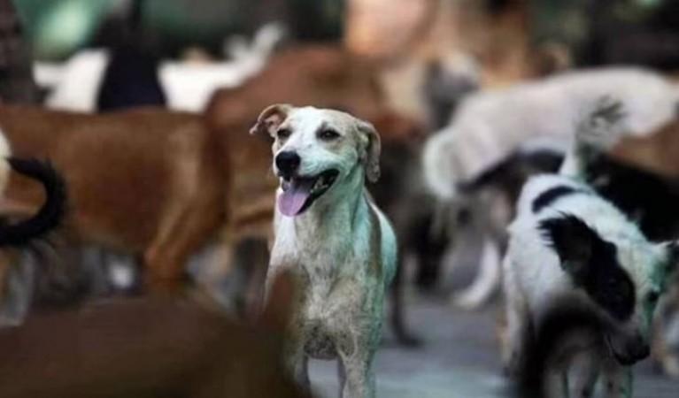 क्रूरता! एपी में 100 कुत्तों की बेरहमी से हत्या, शवों को दफनाने के दौरान सामने आया मामला