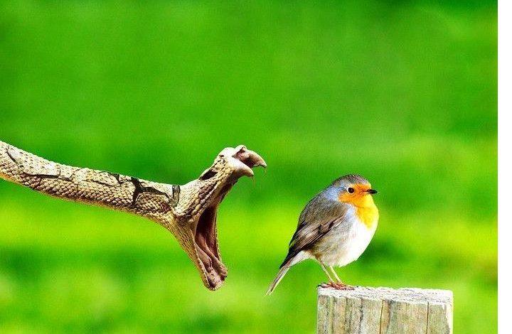 ज़हरीला सांप चिड़िया को खाना चाह रहा था, मगर उसकी ताक़त के सामने टिक नहीं पाया, वीडियो देख हैरान हो गए लोग