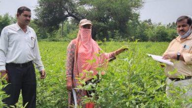 धान के साथ इन फसलों को शामिल किया गया न्याय योजना में